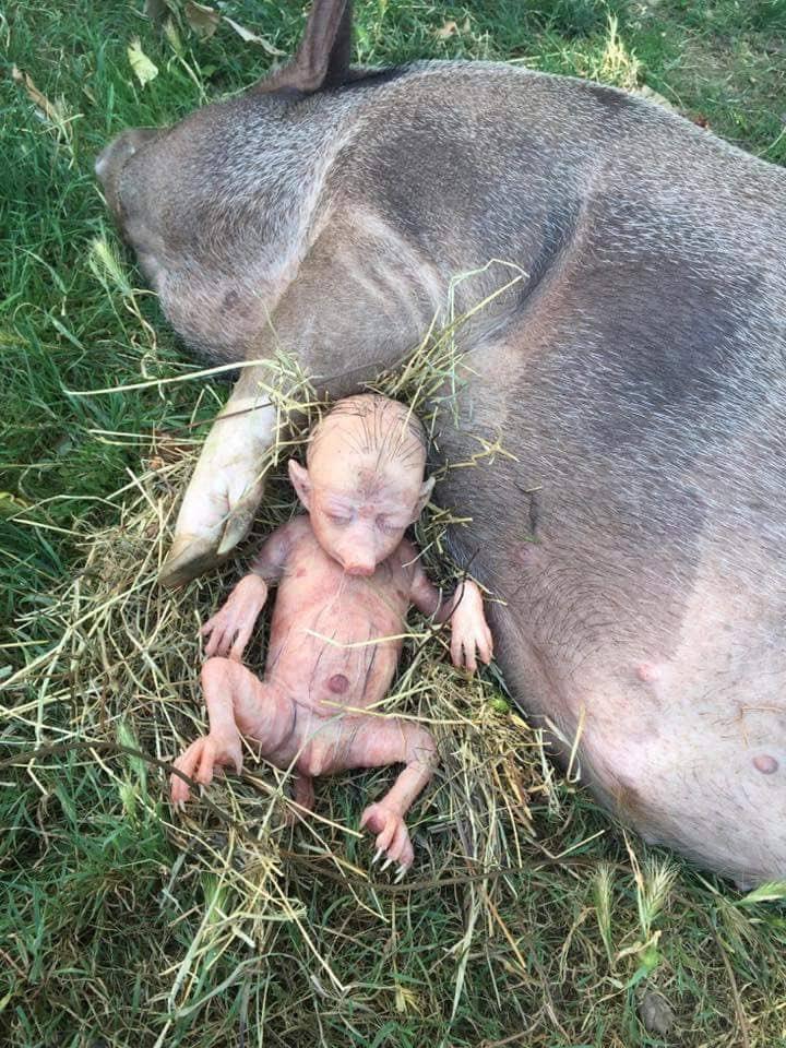 Domuza benzeyen bebeğin sırrı çözüldü 3