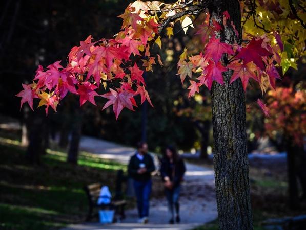 Ankara'da sonbahar bir başka güzel 1