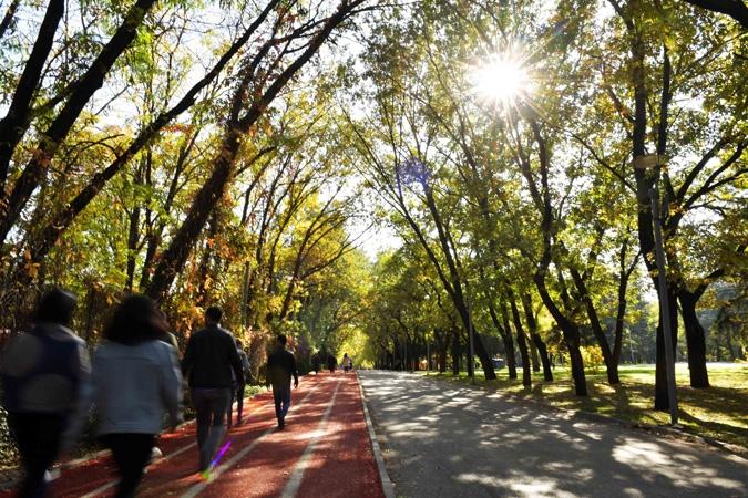 Ankara'da sonbahar bir başka güzel 11