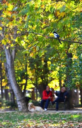 Ankara'da sonbahar bir başka güzel 6