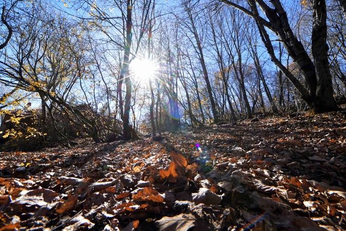 Ankara'da sonbahar bir başka güzel 9