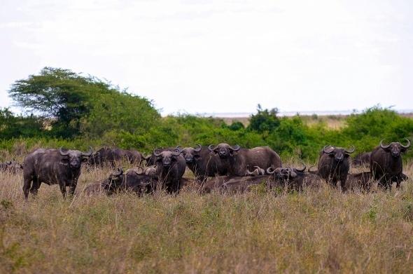 Afrika'da vahşi yaşam 1