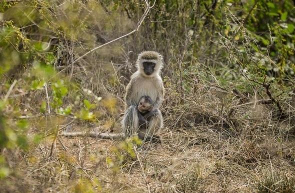 Afrika'da vahşi yaşam 10