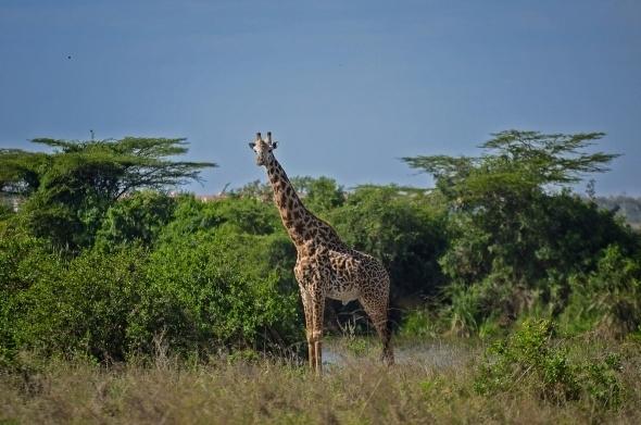 Afrika'da vahşi yaşam 14