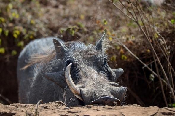 Afrika'da vahşi yaşam 15
