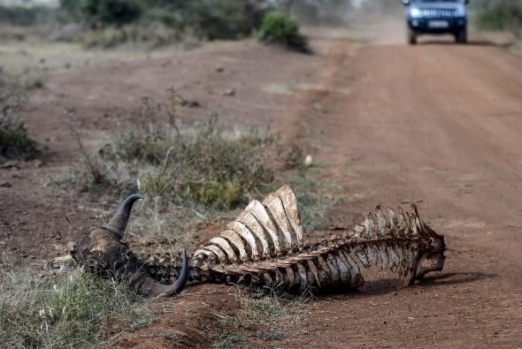 Afrika'da vahşi yaşam 16