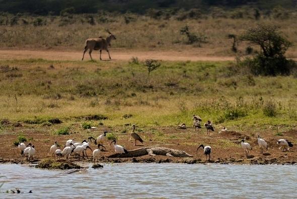 Afrika'da vahşi yaşam 2