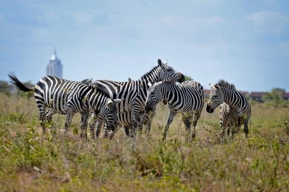 Afrika'da vahşi yaşam 3