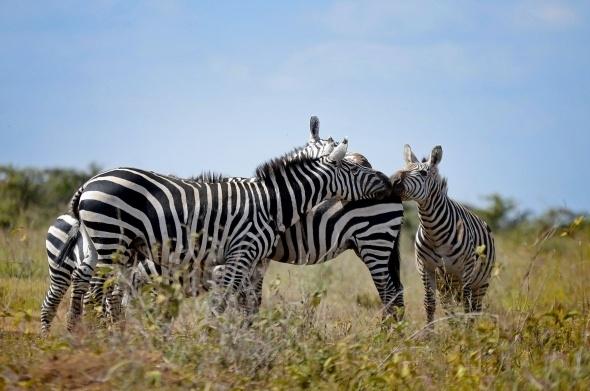 Afrika'da vahşi yaşam 4