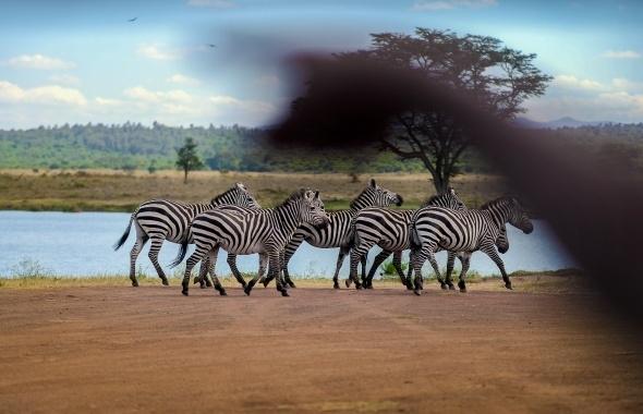 Afrika'da vahşi yaşam 6