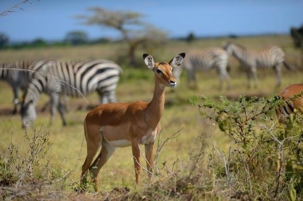 Afrika'da vahşi yaşam 7