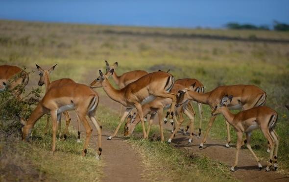Afrika'da vahşi yaşam 8