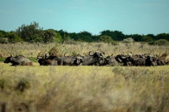 Afrika'da vahşi yaşam 9
