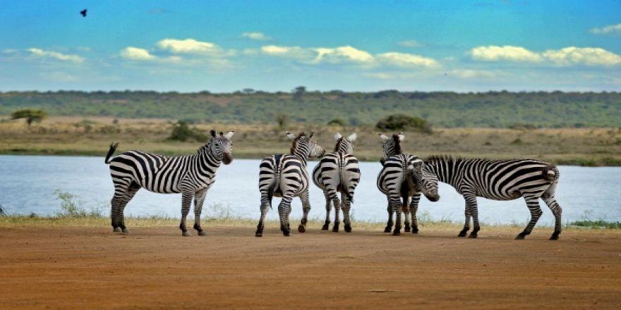 Afrika'da vahşi yaşam