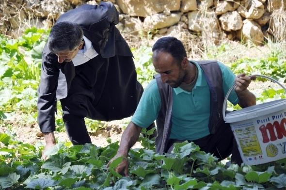 200 yıllık geleneği sürdüren köylüler hasta olmuyor 9