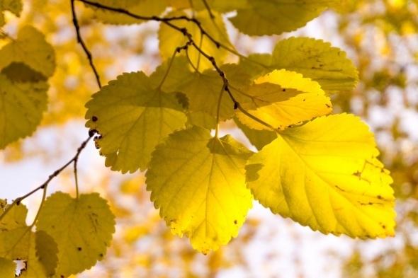 Muhteşem sonbahar renkleri 2