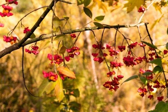 Muhteşem sonbahar renkleri 6