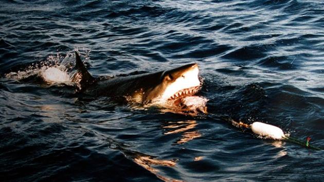 Profesyonel sörfçüye köpek balığı saldırdı