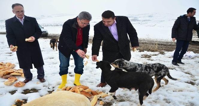 Başkan Çetin, sokak hayvanlarını elleriyle besledi