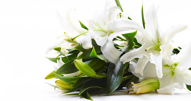 'Kadınlar Günü'nün favori çiçeği; lilyum'