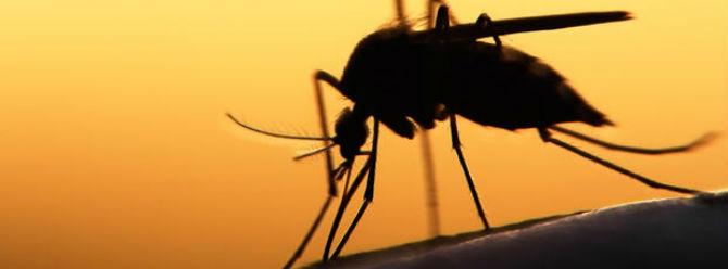 Bilim insanlarından Zika virüsü alarmı