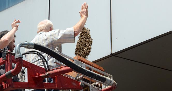 Bankaya arı istilası