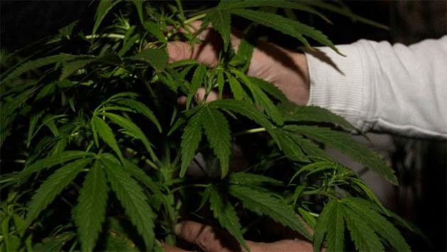 Başkentte marihuana üretilen eve baskın düzenlendi