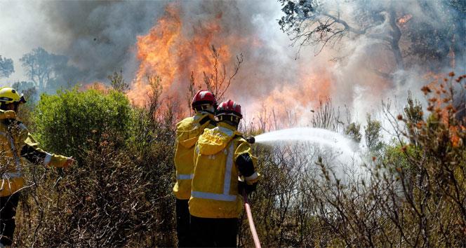 Fransa'da orman yangınları nedeniyle 12 bin kişi tahliye edildi
