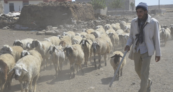 Çobanlıktan üniversiteye uzanan yaşam öyküsü