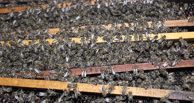 Yola düşen kovandaki arılar telef oldu