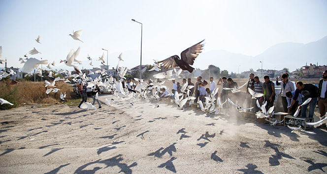 500 güvercin, dostluk için havalandı