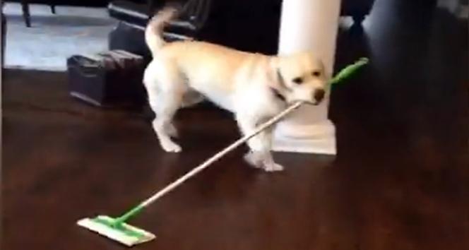 Evin temizliği ondan sorulur