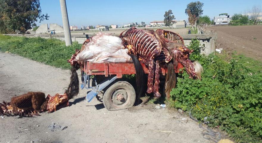 Adana'da at ve eşek kasaplarına suçüstü! Bir römork at ve eşek eti yakalandı