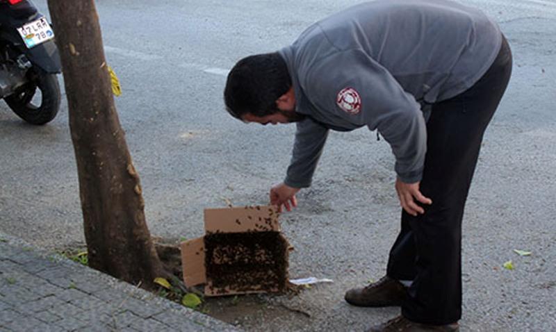 Caddeyi arılar bastı