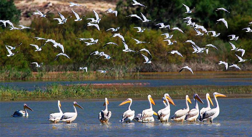Nevzat Ceylan: Kuşlar artık kuraklıktan etkilenmeyecek