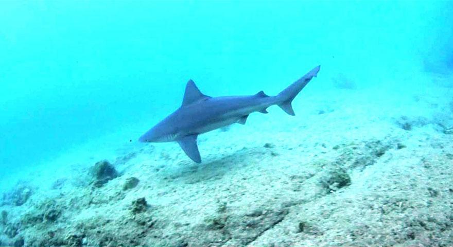 Bodrum ve Marmaris'te köpek balığı paniği