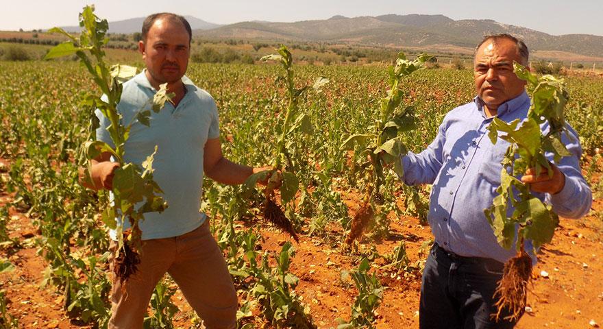 Karacasulu üreticiler yardım bekliyor