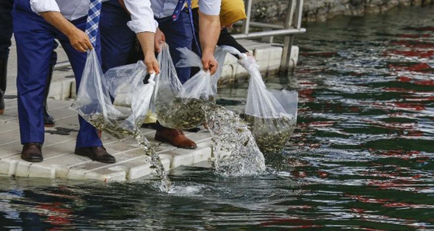 Ankara'nın gölleri balık üretecek