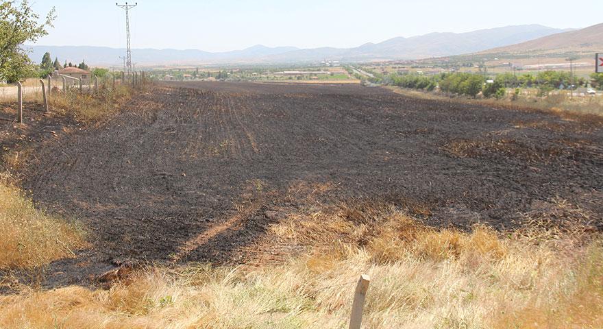 Sigara izmariti 80 dönüm buğdayı kül etti
