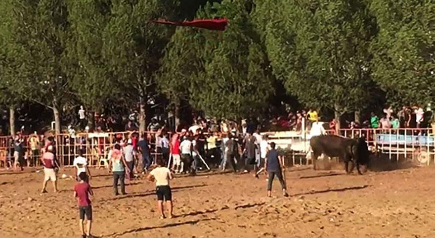 Aydın'da boğa güreşi arenası ringe dönüştü