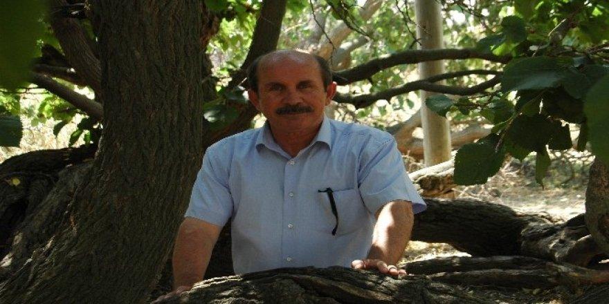 Polatlı'da ağaçlar koruma altına alındı