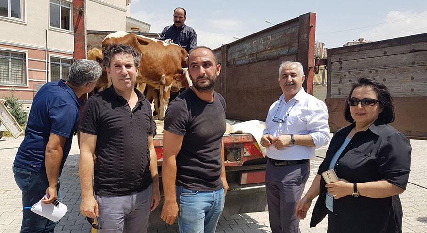 Proje hayata geçti! Genç çiftçilere sığır desteği