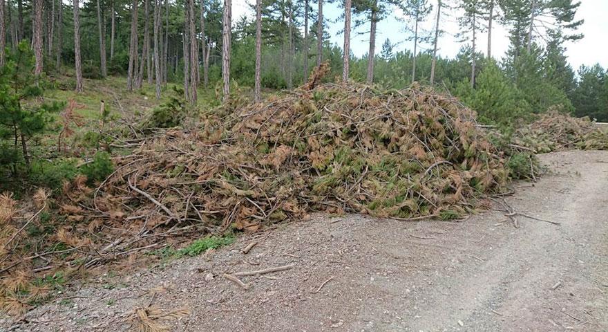 Orman atıklarından enerji üretiliyor