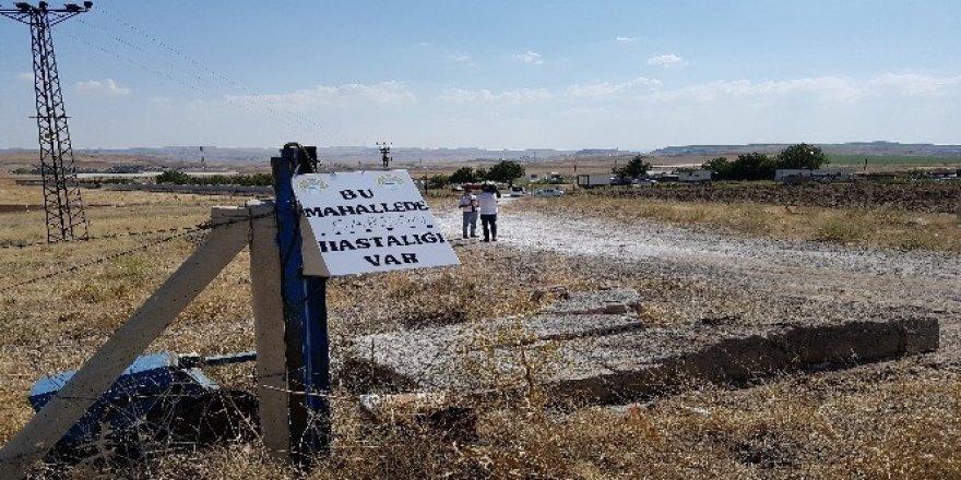 Şarbon hastalığı olan çiftlikte üst düzey önlem alındı