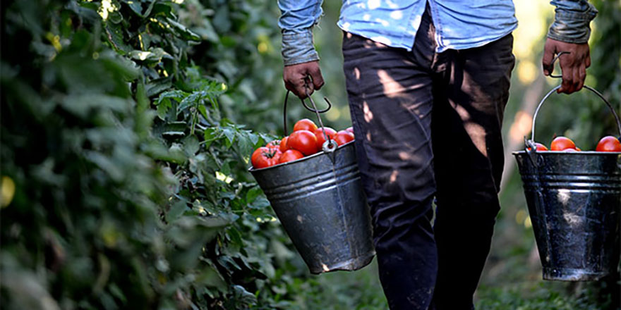 Zam şampiyonu domates dolarla yarışıyor