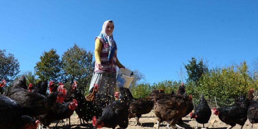 2 tavukla başladı, koca bir çiftlik sahibi oldu