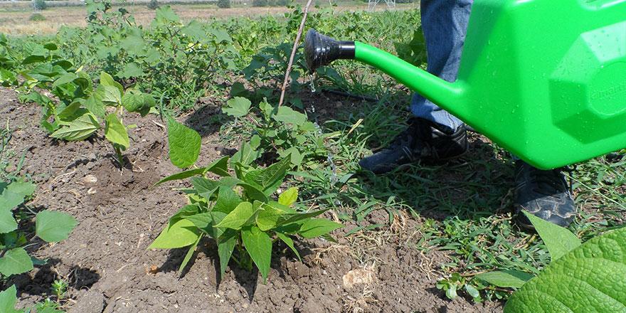 """Organik tarıma """"üniversiteli solucan"""" desteği"""