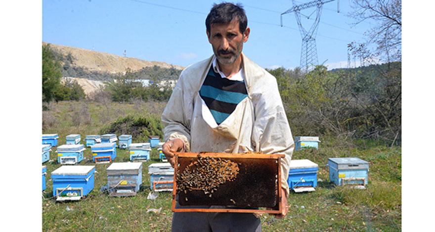 Arı ölümleri korkuttu