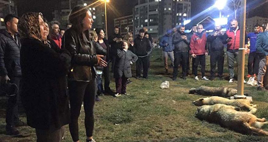 Ankara'daki köpek katliamı ile ilgili 1 gözaltı