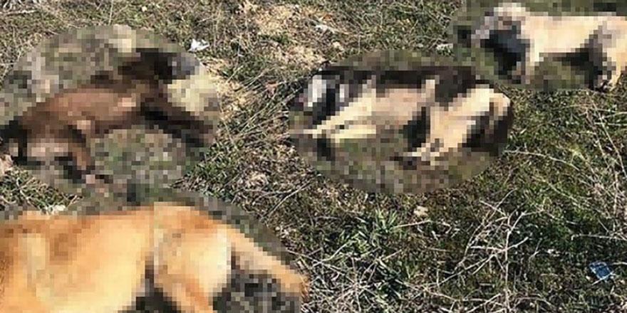 Ankara'da yine köpekler katledildi